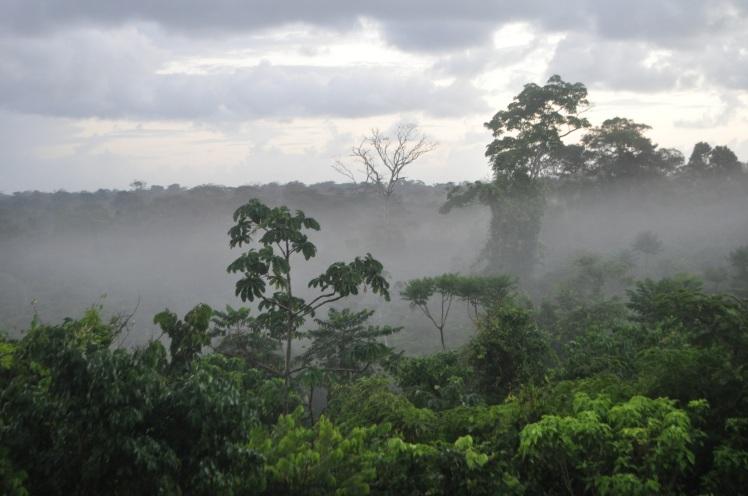 bosque tropical caribe Nicaragua